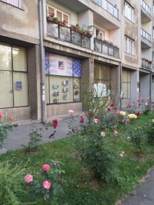 Roses in Sarajevo