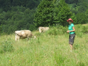 Cows among alpine meadows