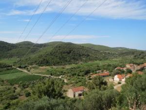 Grape vines near Smokvica