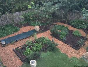 Vegetable and herb garden, freshly mulched