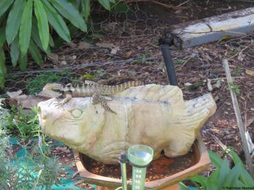 Water dragon on fish sculpture
