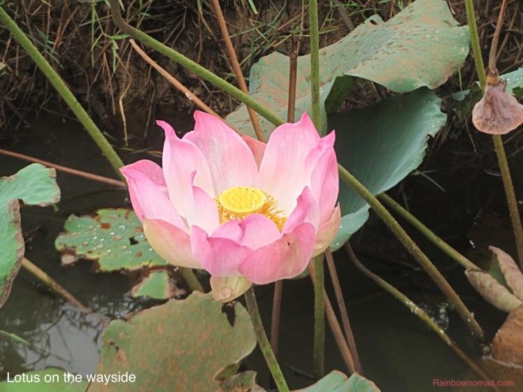 Lotus, Siem Diep
