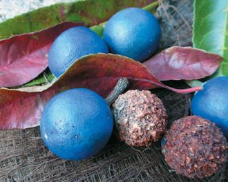 superfoods_australian_native_blue_quandong_19j9pfg-19j9pfv