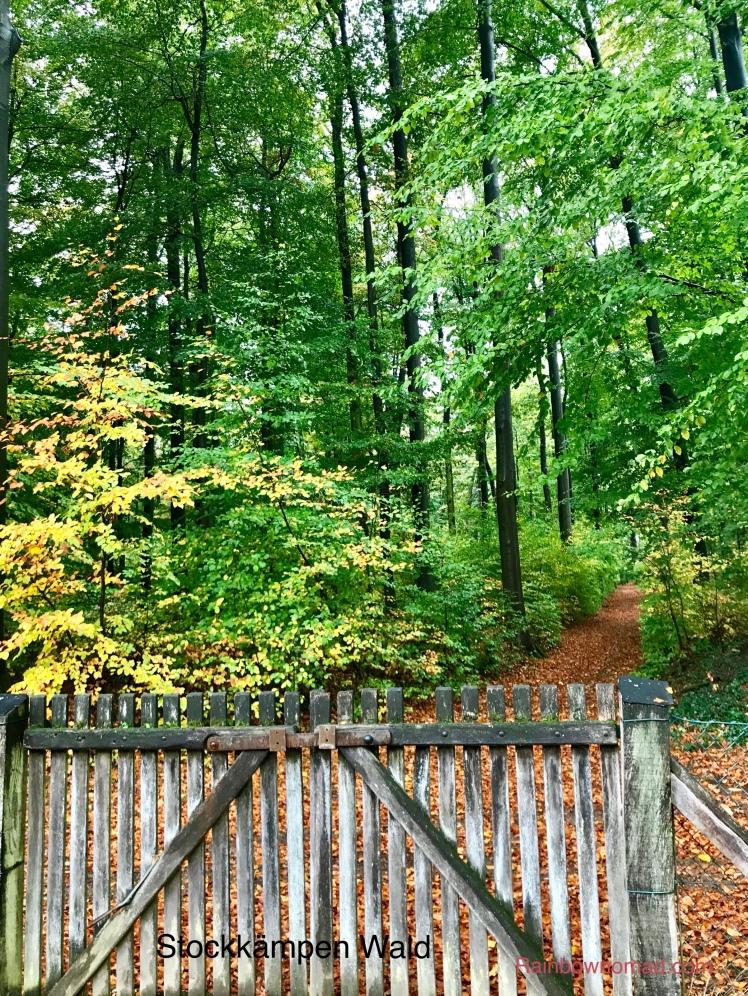 Stockkampen Wald