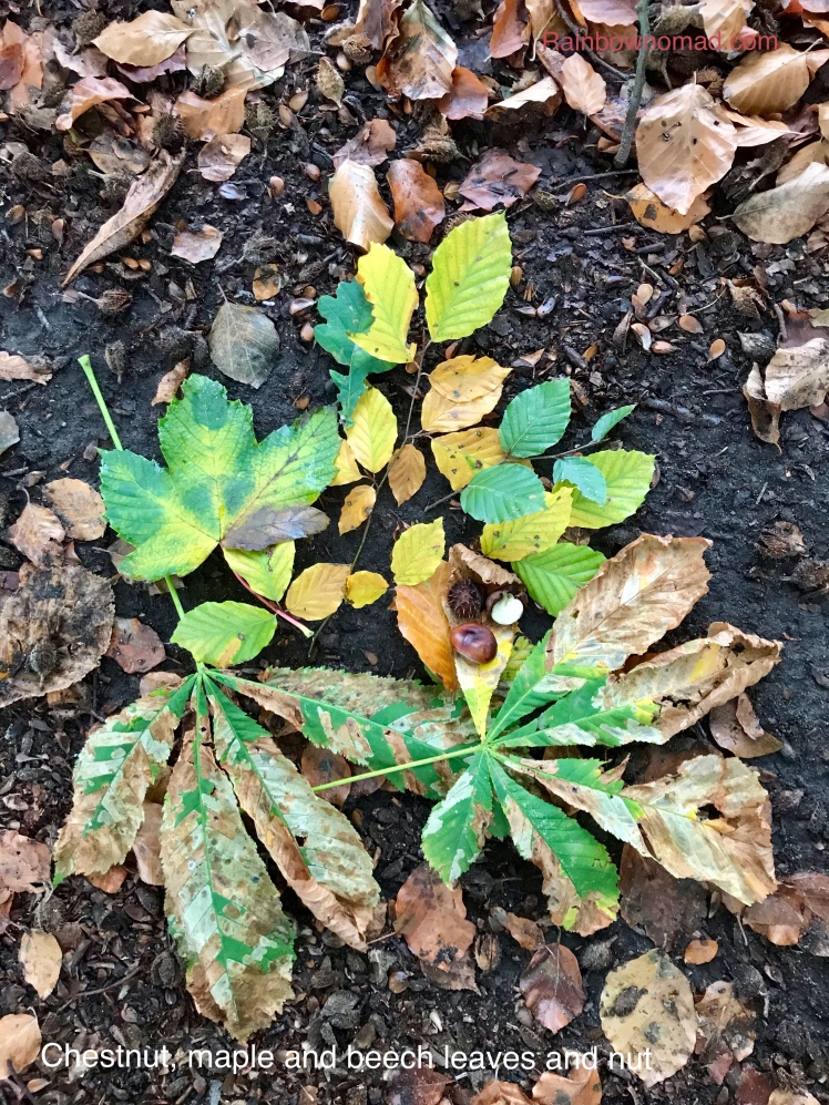 Chestnut, maple and beech leaves