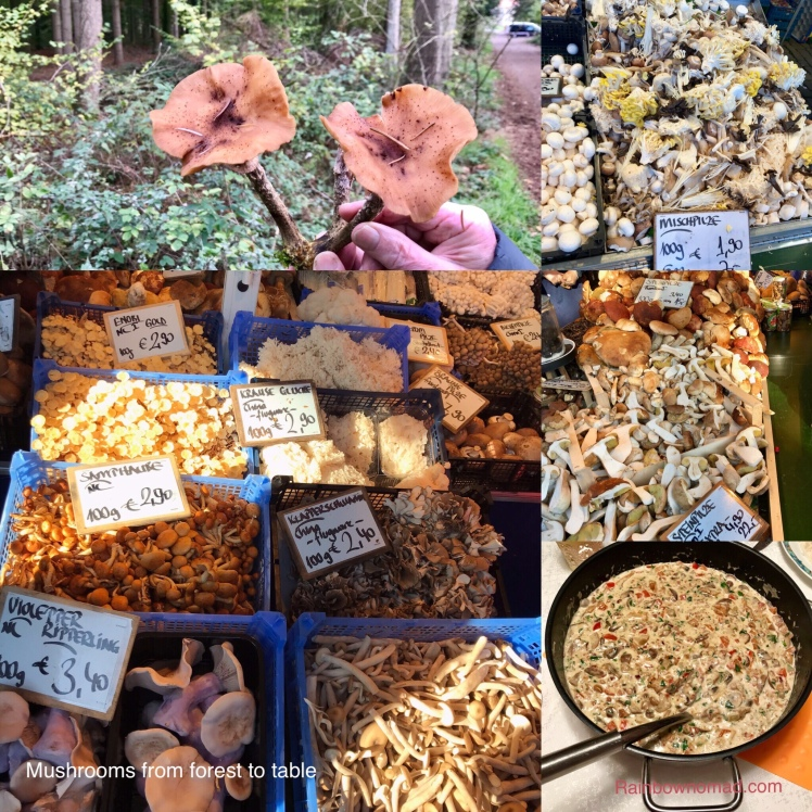 Mushrooms from forest to table