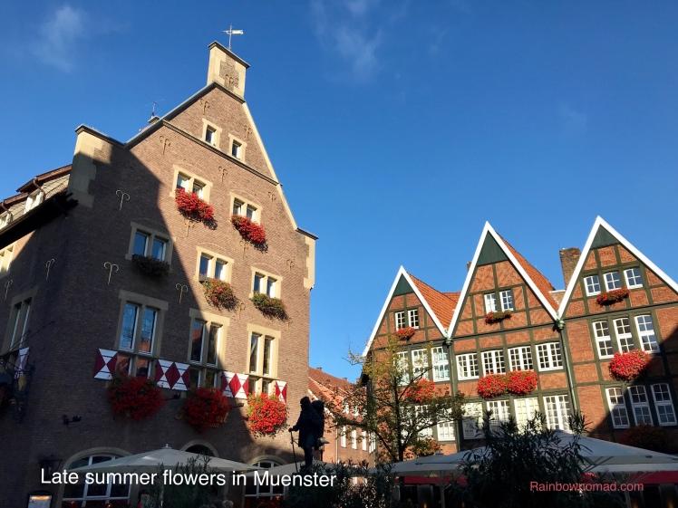 Late summer flowers in Muenster