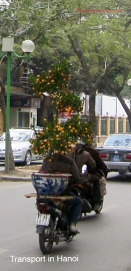 Cumquat tree transport