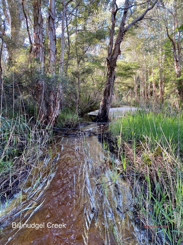 Billinudgel Creek